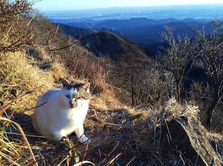 塔ノ岳の猫